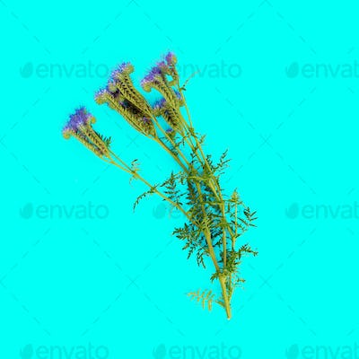 Wild flower on blue background. minimal style