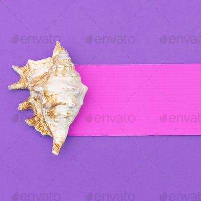 Shells. Ocean concept. Minimal art design Candy Colors