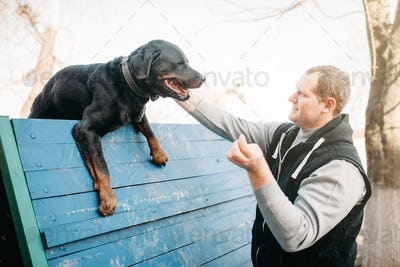Cynologist training service dog on playground