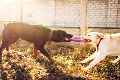 Working dogs on training, cynologist partner