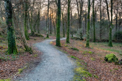 Winding Path Through Woodland