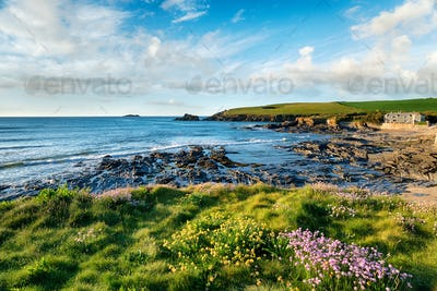 Summer at Trevone in Cornwall