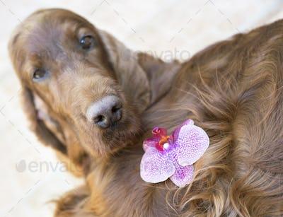 Cute dog nose