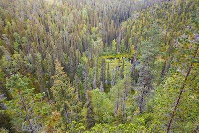 Finland forest and lake at Pieni Karhunkierros trail. Autumn season.