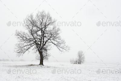 Solitary tree in snowy landscape