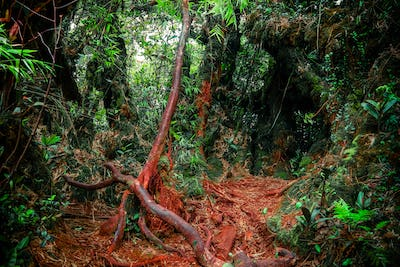 Surreal colors of fantasy landscape at mystical tropical mossy forest