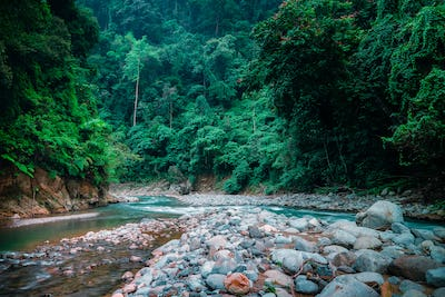 Mysterious jungle landscape with fast stream. Sumatra, Indonesia.