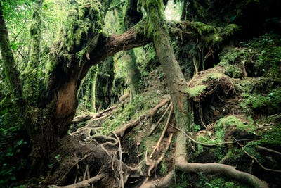 Surreal magic of wild forest.
