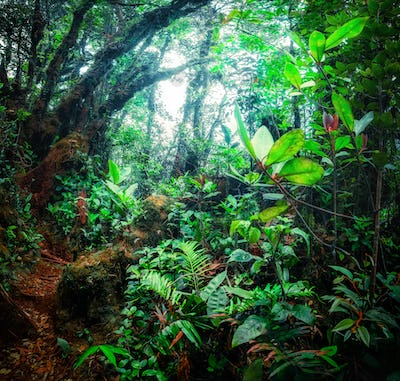Mystical tropical mossy forest with amazing jungle plants