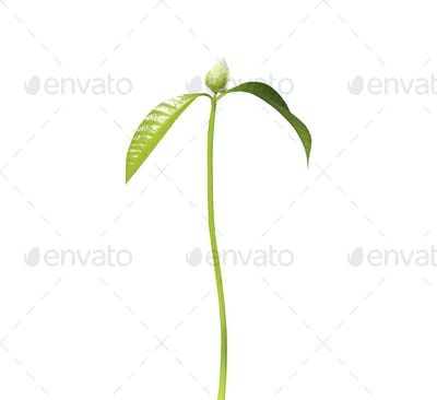 green flower sprout plants