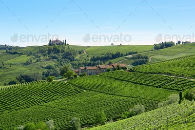 Green vineyards in a sunny day in the Italian country, blue sky
