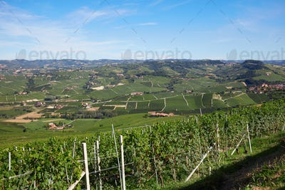 Green vineyards and Langhe hills in Italy in a sunny day