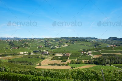 Green countryside with vineyards and fields in Italy