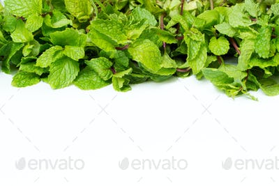 Fresh mint background
