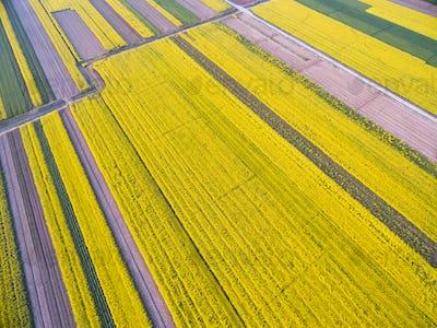 bird's eye view of the spring fields