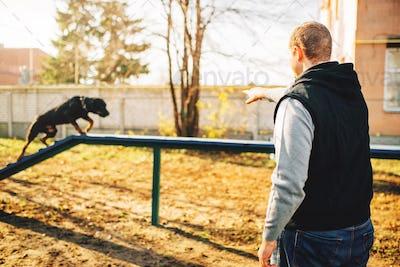 Cynologist trains a dog to keep balance