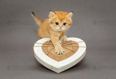 Little kitten  and gift box