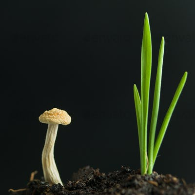 young mushroom and plant sprouting from soil
