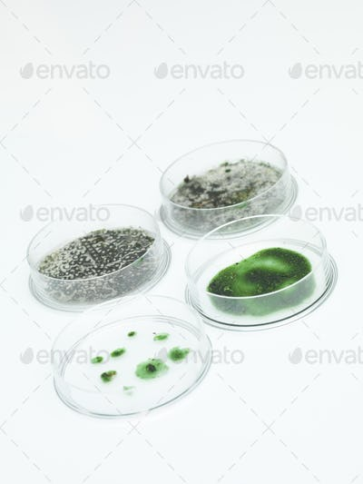 different development stages of mold