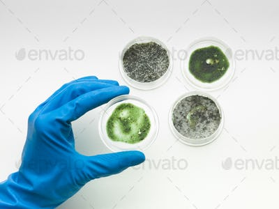 specimens of mold with hand holding one
