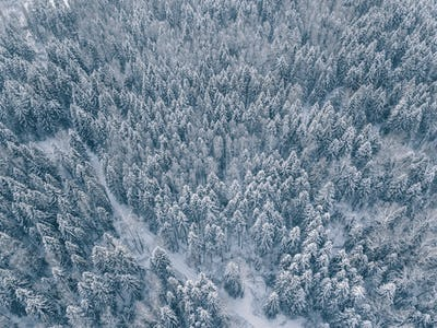 aerial view of winter forest covered in snow and frost.