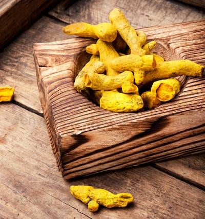 spice root Curcuma