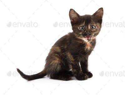 kitten sitting and smiling