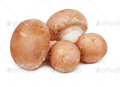 Brown mushrooms isolated