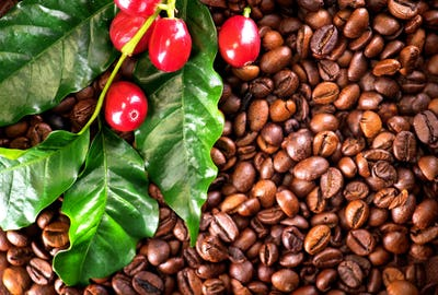 Coffee. Real coffee plant on roasted coffee background. Border a