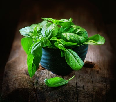 Basil. Closeup of fresh basil leaves in a bowl on dark rustic wo