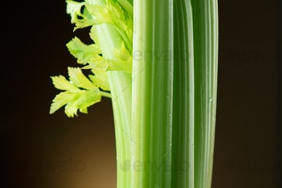Celery closeup over black background. Leaves and stem of fresh o
