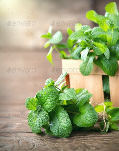 Mint. Bunch of fresh green organic mint leaf on wooden table clo
