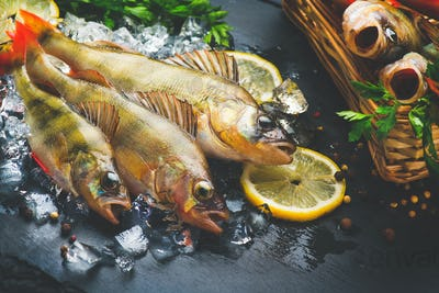 Fresh fish on ice with aromatic herbs, spices, salt. Raw perches