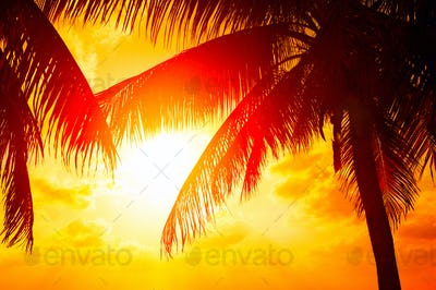 Sunset beach with palm trees and beautiful sky landscape. Beauti