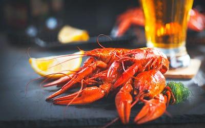 Boiled red crayfish or crawfish with a beer and herbs closeup