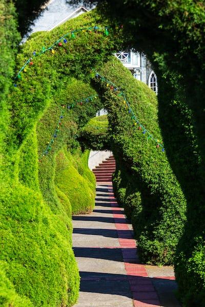 Garden in Costa Rica