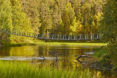Finland forest at sunset. Pieni karhunkierros trail. Nature background. Horizontal