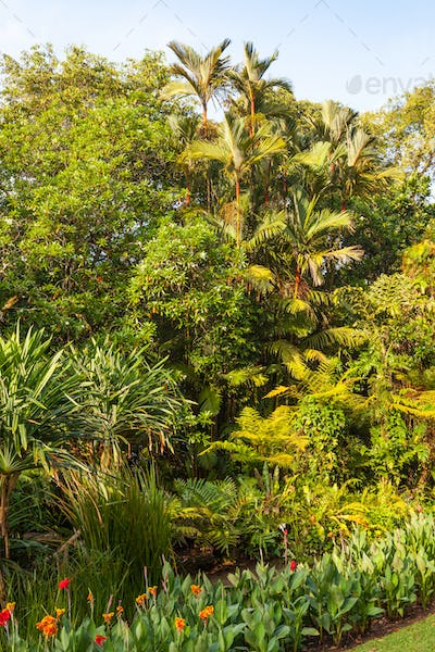 Plants and Trees in the Singapore Botanic Gardens