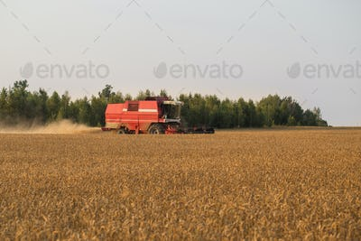 Harvester in wheat field