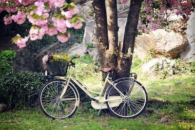 in the spring garden