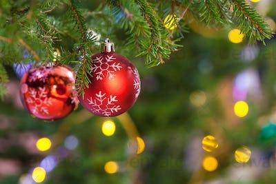 two red balls on fresh fir christmas tree twig