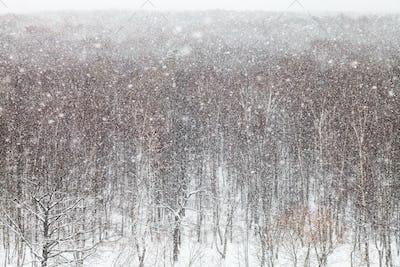 blizzard over trees in park in winter
