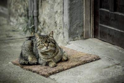 Blind cat