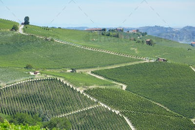 Vineyards in Piedmont in a sunny day, Unesco heritage in Italy