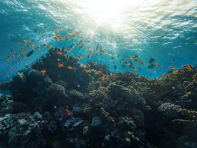 Coral Reef Red Sea Egypt Marsa Alam