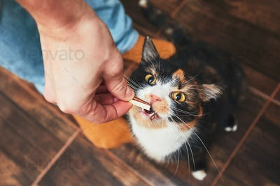 Snack for cat