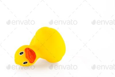 Fallen ducky