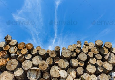 Stack of cut timber.
