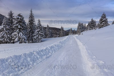rustic road in winter