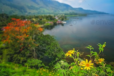 Flowers on the shore of Lake Toba in Sumatra